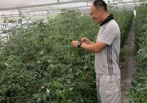 大阪岸和田のトマト農家
